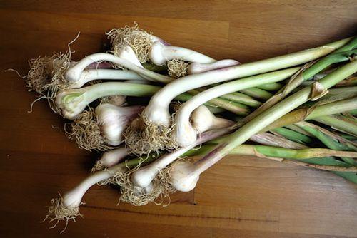 cookitaly recipes, italian cooking, green garlic, fish
